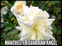 Manchester Guardian Angel