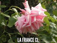 La France Cl.