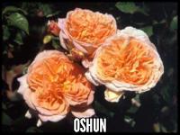 Oshun™