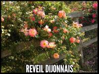 Reveil Dijonnais