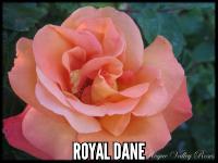 Royal Dane