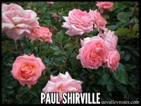 Paul Shirville
