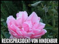 Reichsprasident von Hindenburg