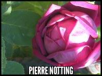 Pierre Notting