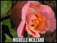 Michelle Meilland