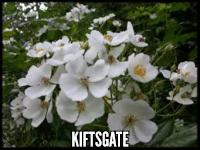 Kiftsgate