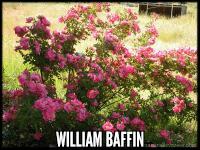 William Baffin