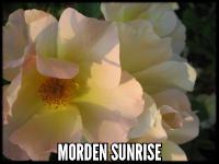 Morden Sunrise