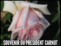 Souvenir du President Carnot