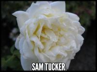 Sam Tucker (Solfaterre)