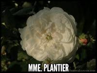 Mme Plantier