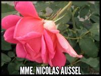 Mme Nicolas Aussel