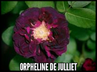 Orpheline de Julliet