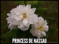 Princesse de Nassau