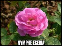 Nymphe Egeria