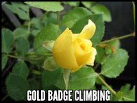 Gold Badge, cl