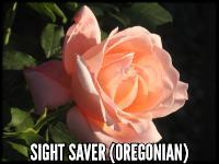 Sight Saver (The Oregonian)
