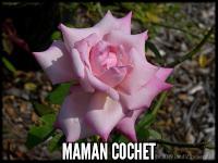 Maman Cochet