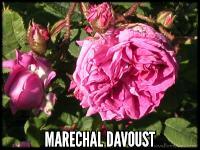 Marechal Davoust