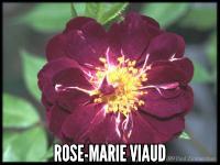 Rose-Marie Viaud