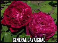 General Cavaignac