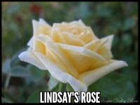 Lindsay's Rose™