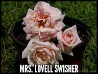 Mrs. Lovell Swisher