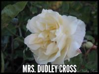 Mrs. Dudley Cross