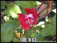 Fire N' Ice