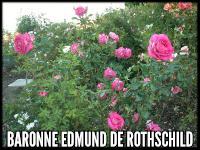 Baronne Edmund de Rothschild