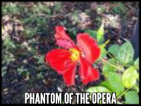 Phantom of the Opera (Bedazzled)