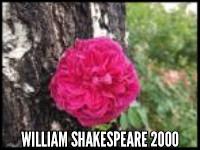 William Shakespeare 2000
