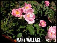 Mary Wallace