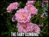 The Fairy Climbing