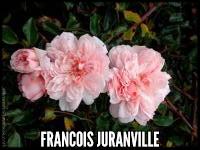 Francois Juranville