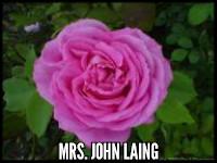 Mrs. John Laing