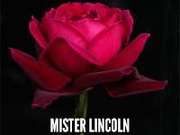 Mister Lincoln