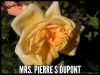 Mrs. Pierre S. Dupont