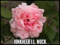 Jonkheer J.L. Mock, Cl.