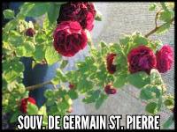 Souvenir de Germain de Saint Pierre