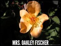 Mrs. Oakely Fischer