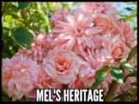 Mel's Heritage™
