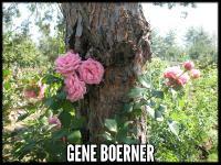 Gene Boerner