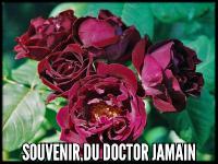 Souvenir du Dr. Jamain