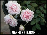 Mabelle Stearns