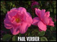 Paul Verdier