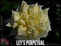 Leys Perpetual
