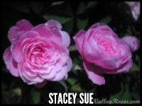 Stacey Sue