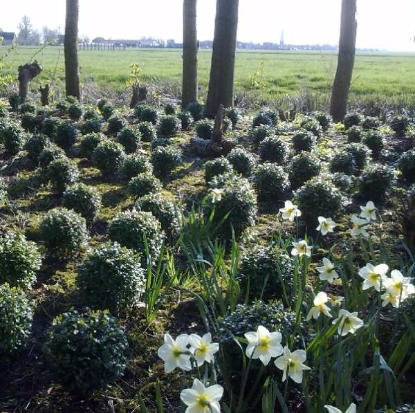 Buxus ruilen voor blauwe bloemen/bollen en struiken!