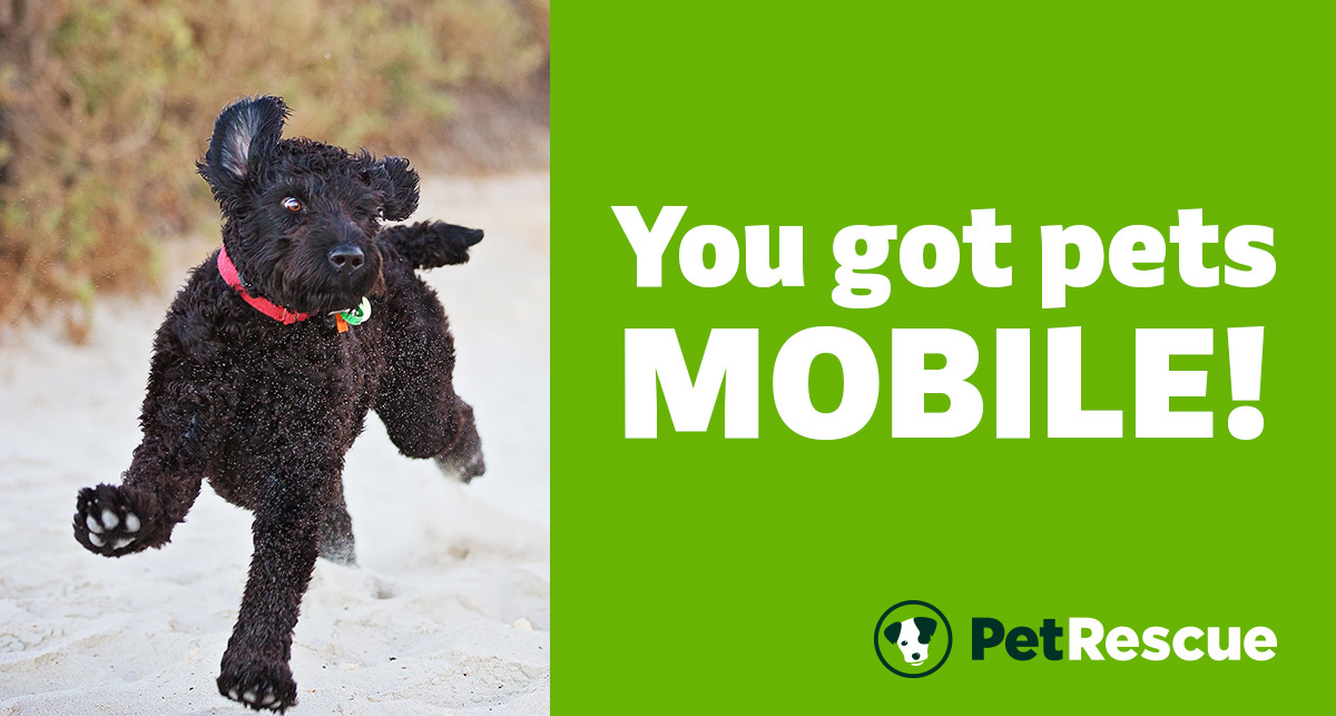 You got pets mobile!